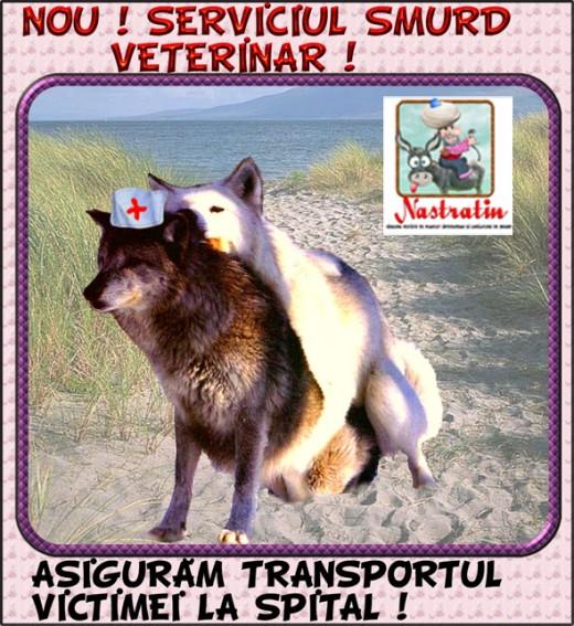 Servicii medicale pentru animale