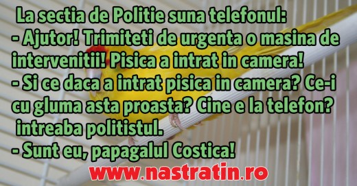 Papagalul Costica