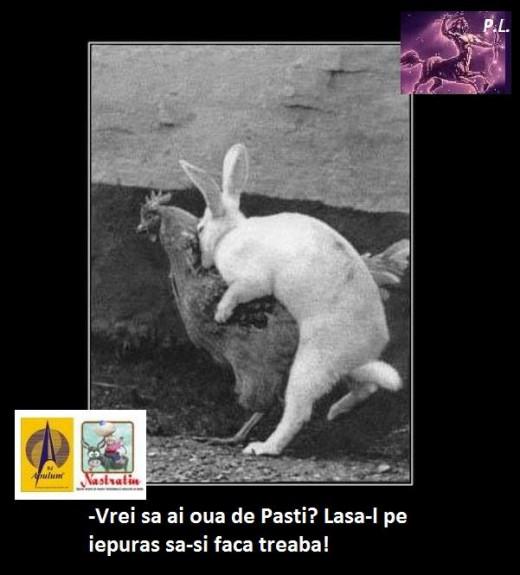 OUA DE PASTE