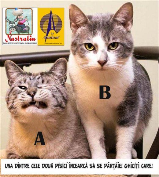 A sau B